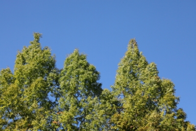 20141105おおの自然観察の森00009