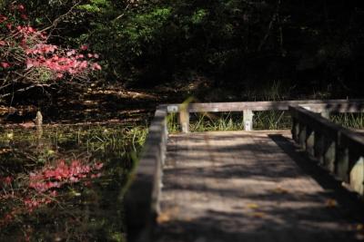 20141105おおの自然観察の森00022
