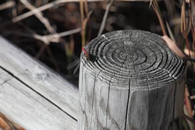 20141105おおの自然観察の森00011
