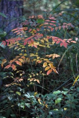 20141105おおの自然観察の森00004