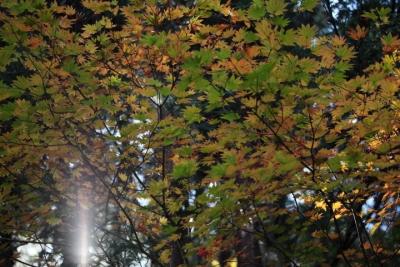 20141105おおの自然観察の森00016