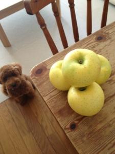 うたとりんご
