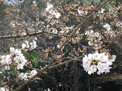 丸亀城06