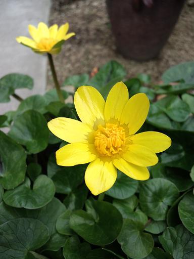 201402_何の花