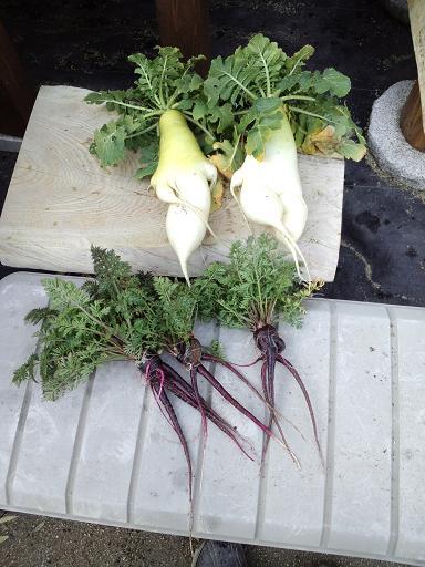20140306_今日の収穫2