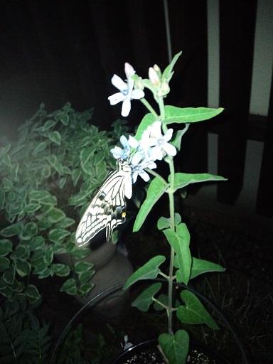 20140627_夜の蝶