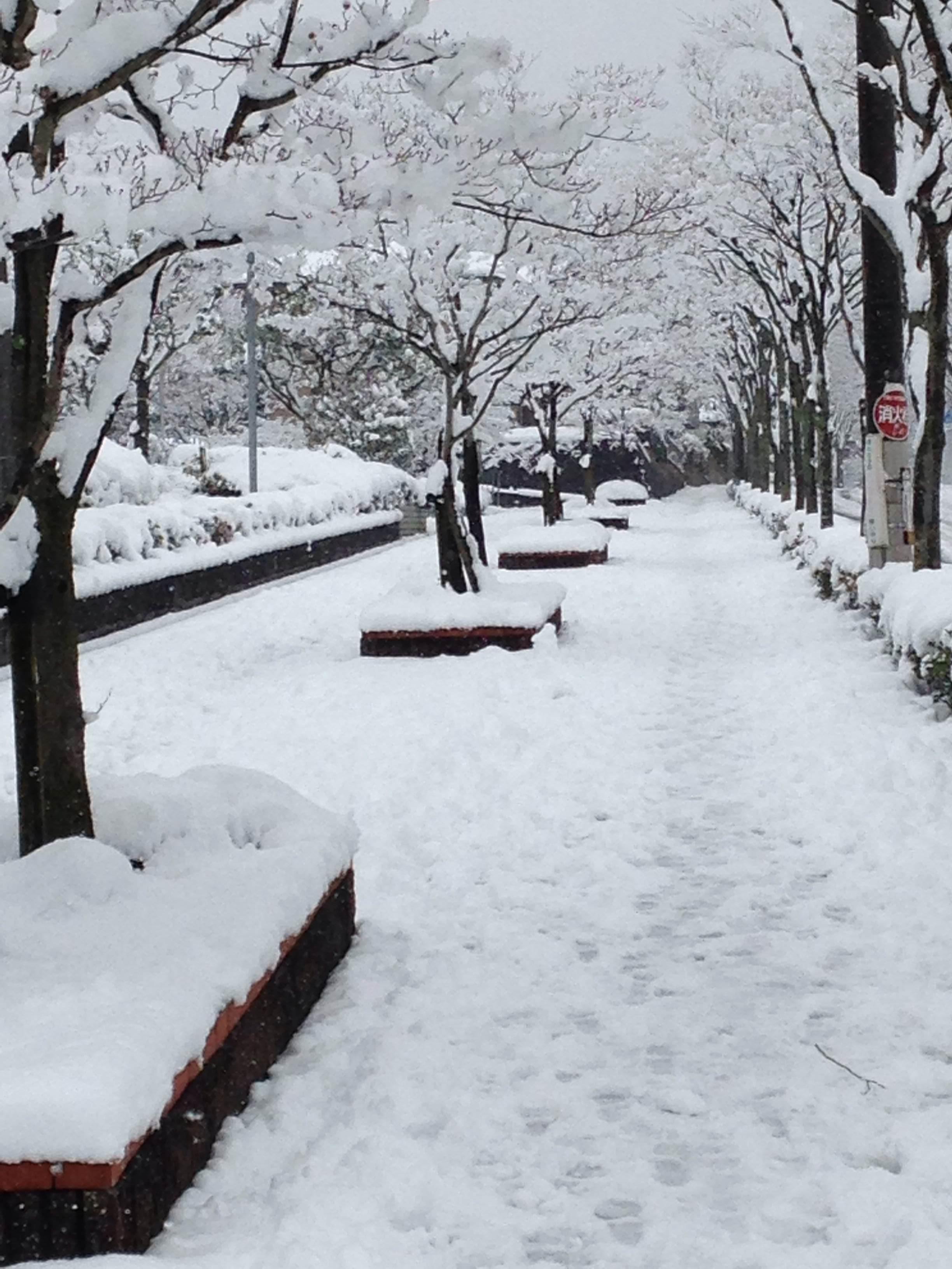 大雪photo