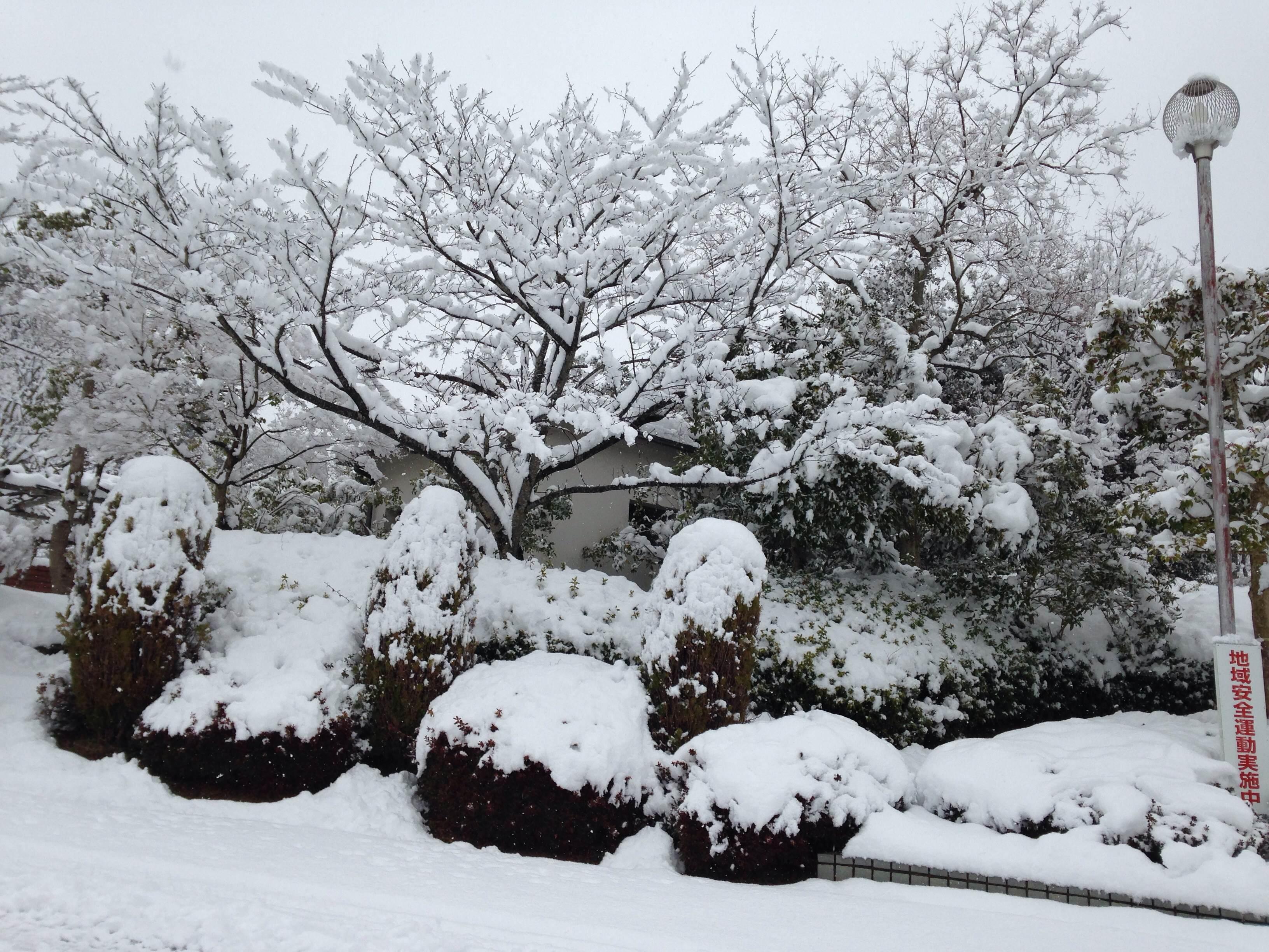3photo大雪