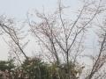 2014.11.8三重・滋賀4