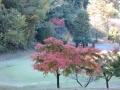 2014.11.19東京・神奈川5