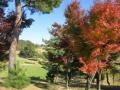2014.11.19東京・神奈川6