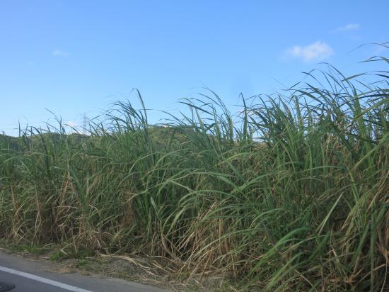 2014.11.23沖縄