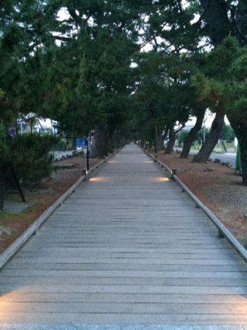 早朝の松原