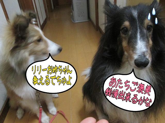 2014-03-20-09-17-21_deco.jpg