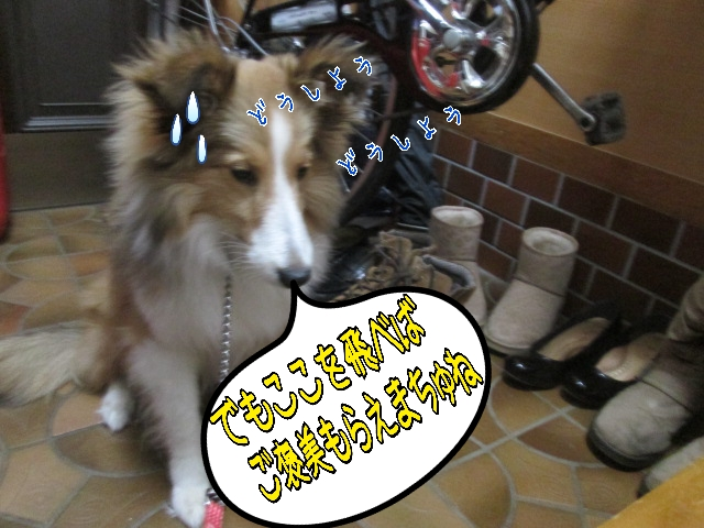 2014-03-20-09-45-32_deco.jpg