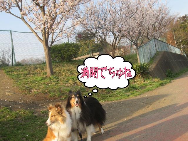 2014-03-29-18-20-50_deco.jpg