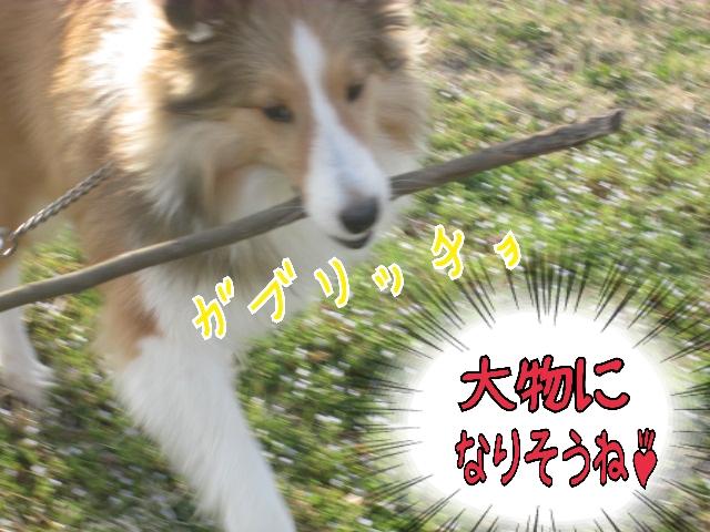 2014-03-29-18-25-48_deco.jpg