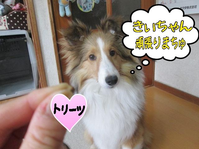 2014-04-03-09-44-34_deco.jpg