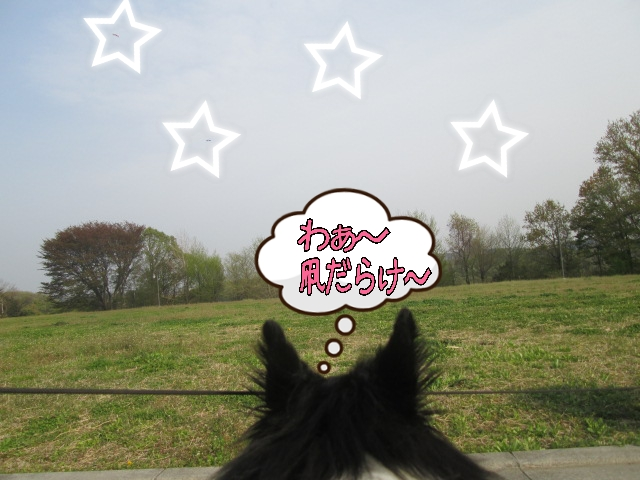 2014-04-16-21-33-24_deco.jpg