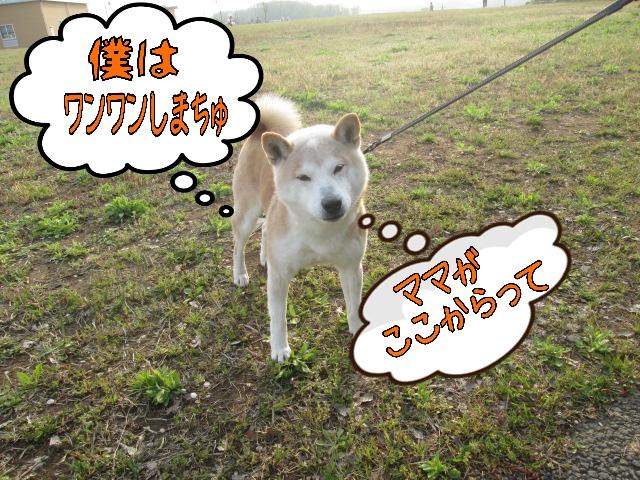 2014-04-17-11-16-51_deco.jpg