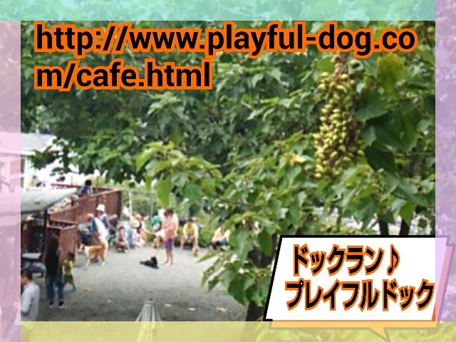 2014-07-13-15-13-39_deco.jpg