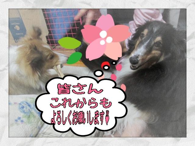 2014-04-03-20-49-03_deco (2)