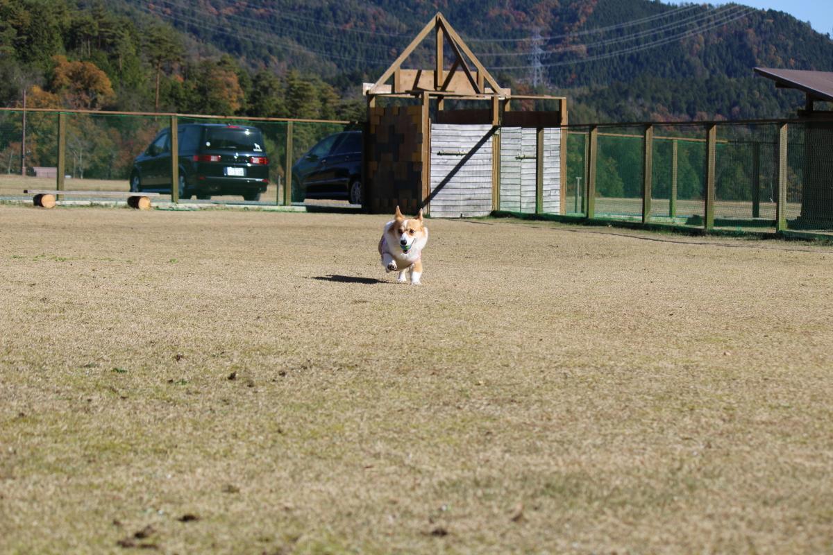 小型犬用ドッグラン