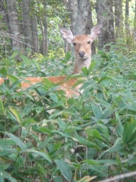 20140908鹿