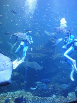 20141007京都水族館7