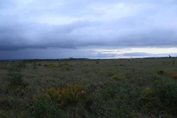 どこまでも湿原