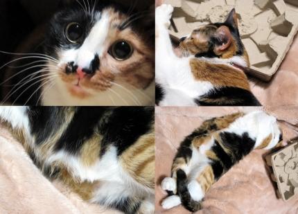 140228_cat01.jpg