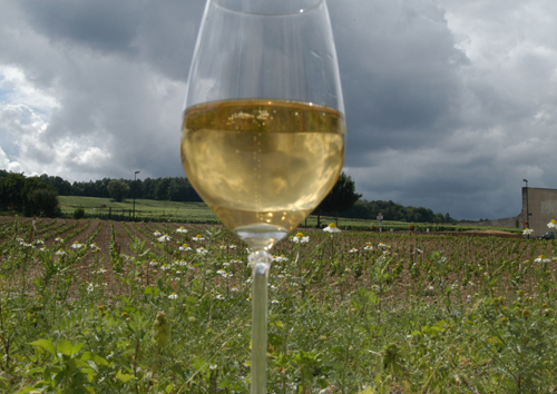 シャンパン01
