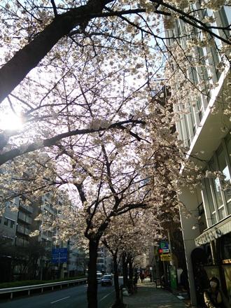 20140328_sakura1.jpg