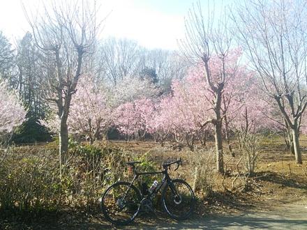 20140331_sakura1.jpg