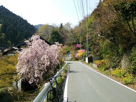 20140419_sakura1.jpg