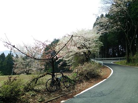 20140419_siraisi2.jpg