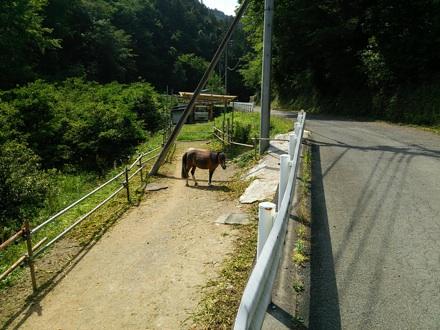 20140531_kouma.jpg