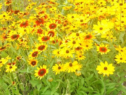 20140706_flower.jpg