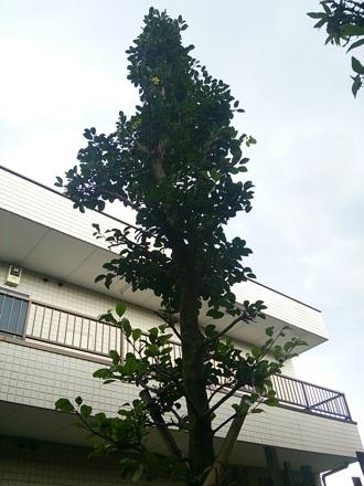 20140711_kurogane1.jpg
