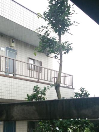 20140711_kurogane3.jpg