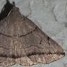 96-ヒメツマオビアツバ-OMD02703
