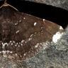 96-フジロアツバ-OMD02306