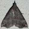 96-オオトビモンアツバ>2014-08-30-栄区-OMD04390