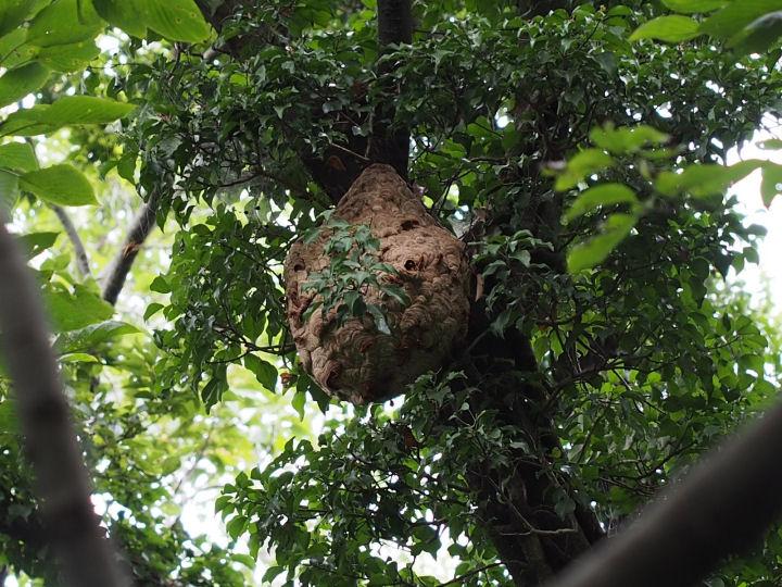 スズメバチの巣1-OMD04547