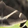 96-ホソオビアシブトクチバ>20104-09-04-栄区-OMD05118