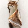 96-アヤトガリバ-OMD01016