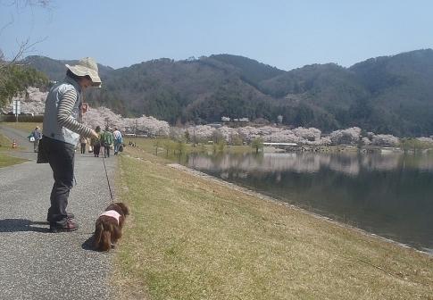 お花見(土師ダム) 001-001