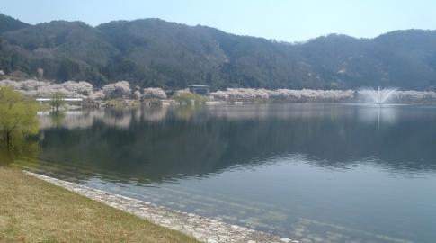 お花見(土師ダム) 004-001