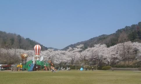 お花見(土師ダム) 012-001