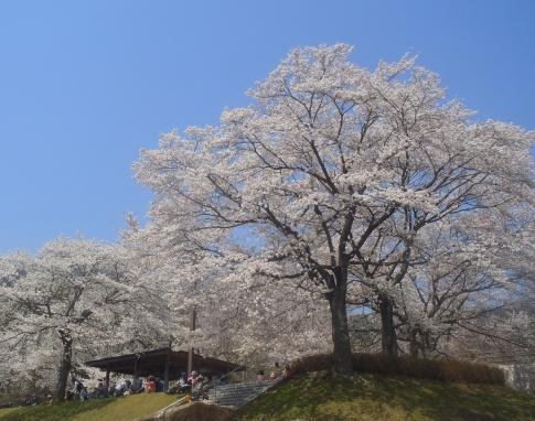 お花見(土師ダム) 015-001